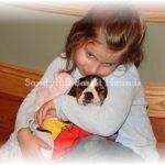 Little girl holding Basset Hound puppy