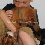 Little boy with Basset Hound puppy