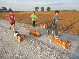Basset Hounds For Sale in Indiana