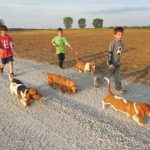 Taking Basset Hounds for a walk